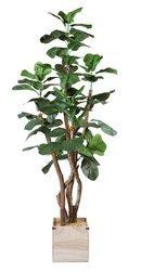 Online Designer Bedroom Fig Wooden Foliage Tree in Planter