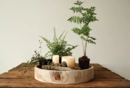 Online Designer Combined Living/Dining SUCCULENT TRAY