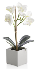 Online Designer Home/Small Office Potted Orchid Plant