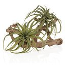 Online Designer Combined Living/Dining Air Plant