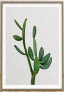 Online Designer Living Room Cactus Photo, Mexican Print,