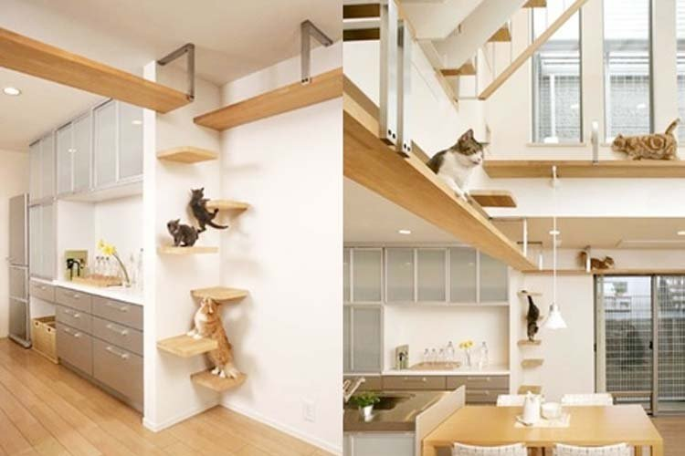 pet-friendly-interior-design-5