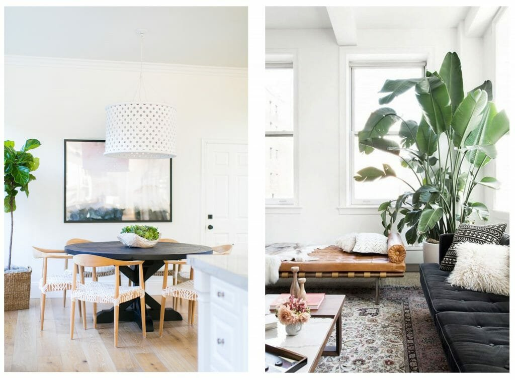how to incorporate nature into your home- indoor floor plants