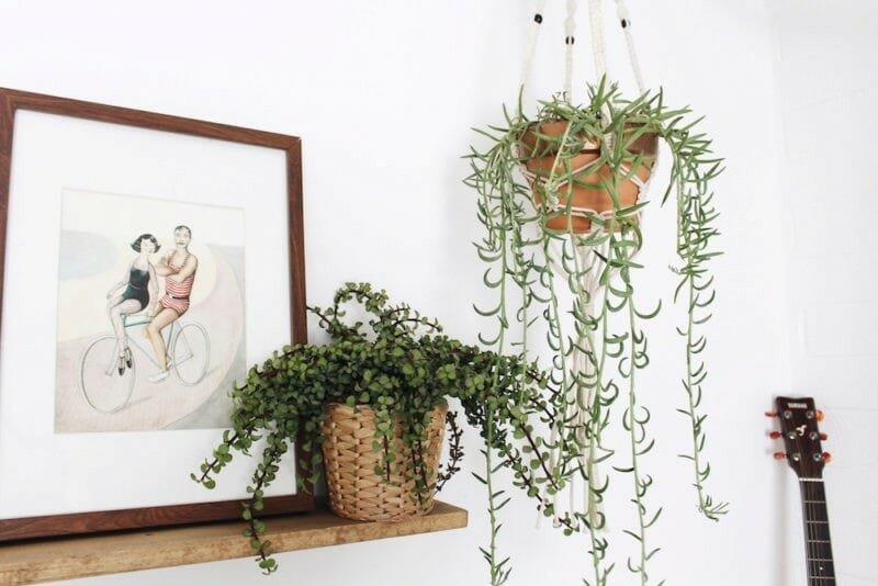 spring interior design trends plants