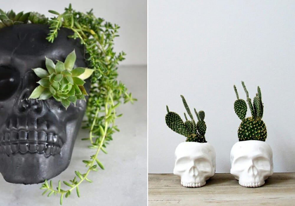 skulls with plants for halloween 2019