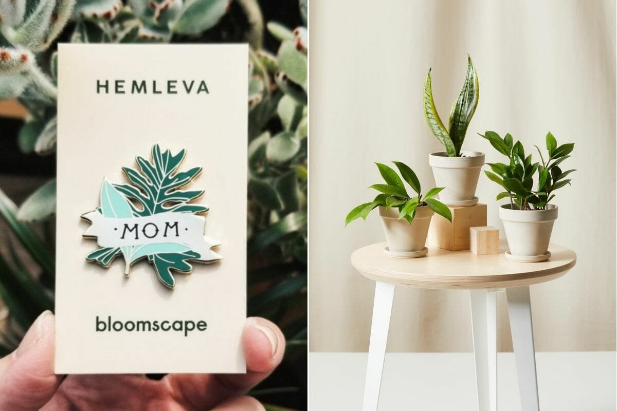 Gift cards for Mother's Day and pot plants on a table from Bloomscape