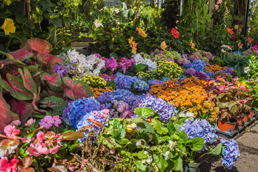 NYC flower market vibrant spring display