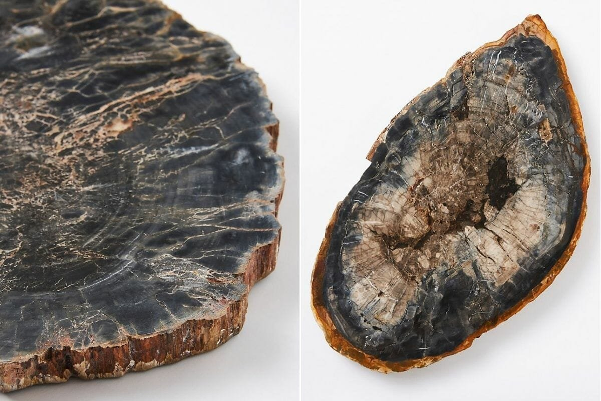 Elegant halloween decor in the form of a petrified wood platter