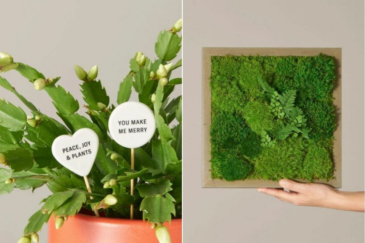 potted plants with message tabs as interior design gifts