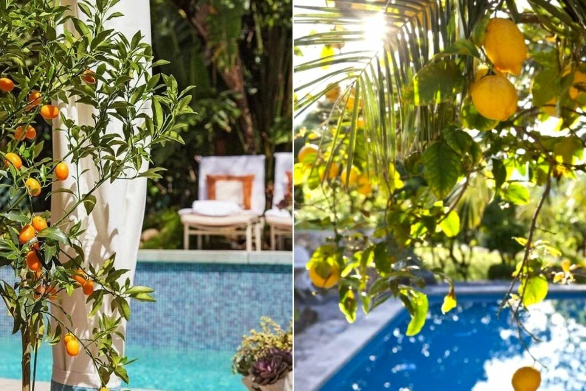 Fruit plants for around the pool as pool decorating ideas