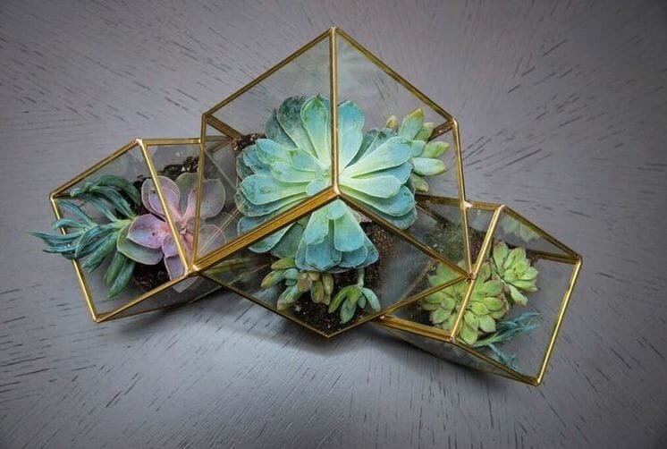 Geometric succulent terrariums from NYC Flower District