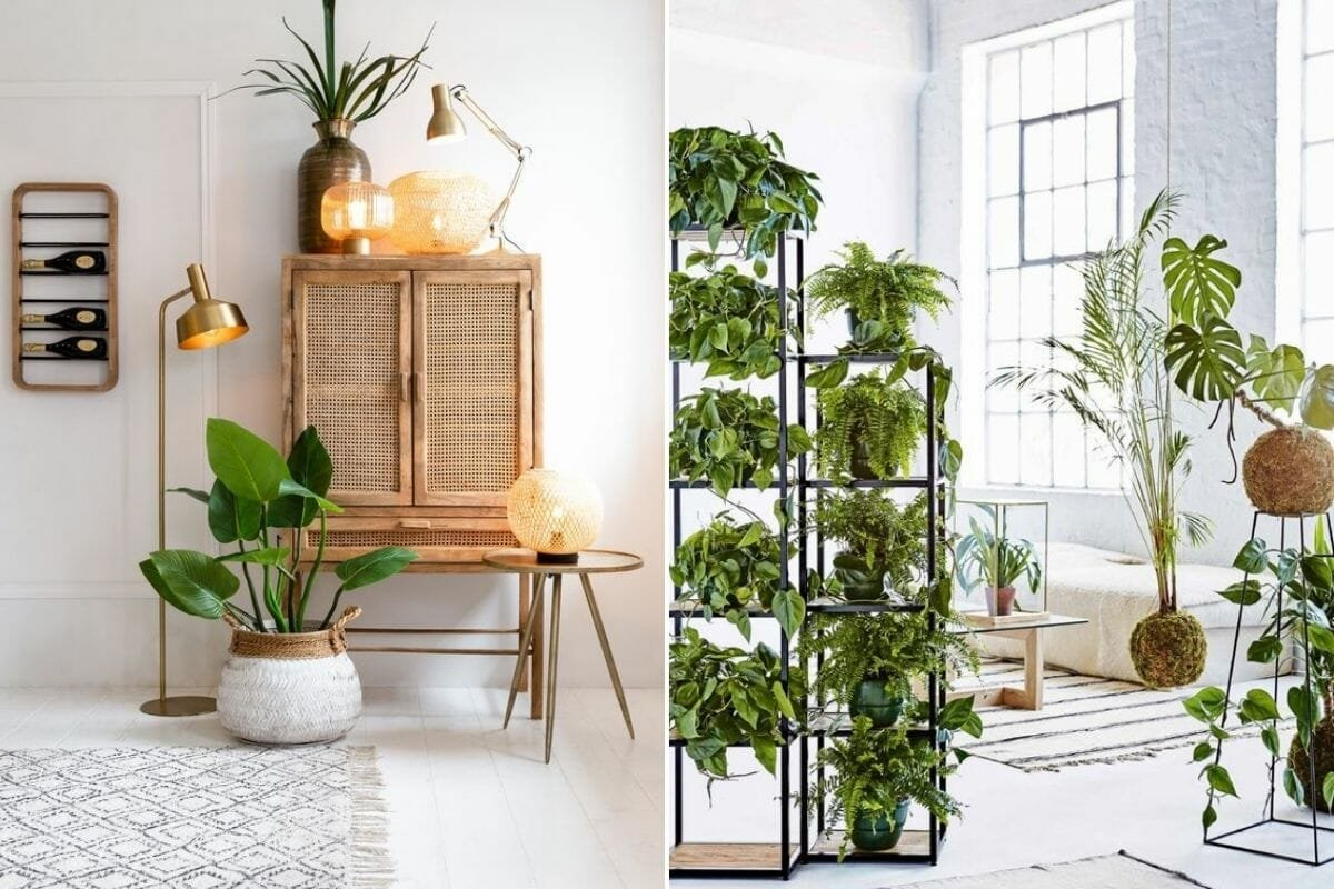 Interior decorating with plants on shelves