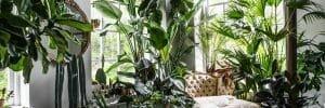Lucious plants in interior design